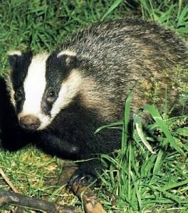 breezy badger - ubuntu5.10