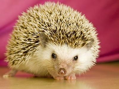 hoary hedgehog - ubuntu 5.04