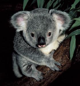 karmic koala - ubuntu 9.10