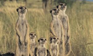 maverick meerkat - ubuntu 10.10